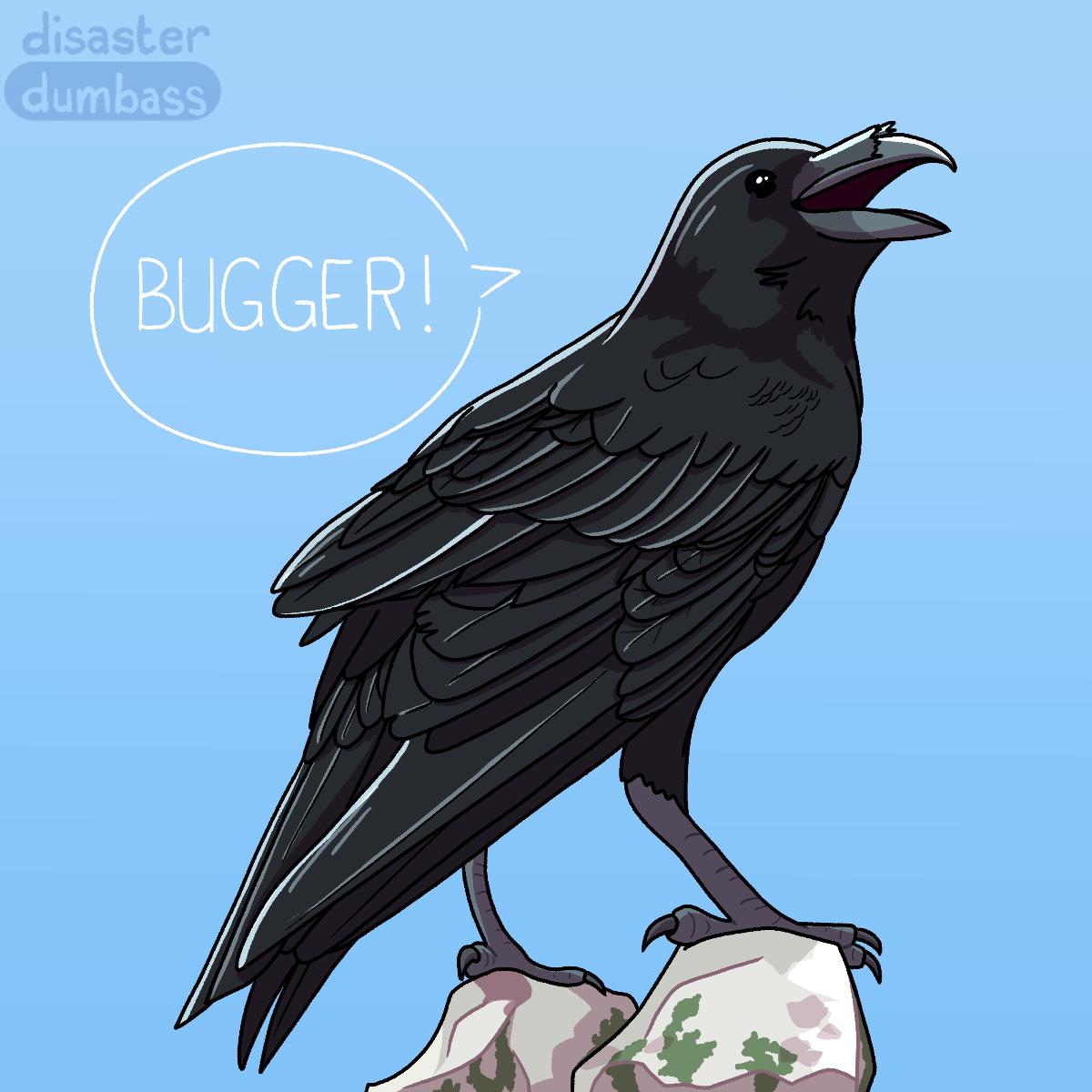 Windsor: Bugger!